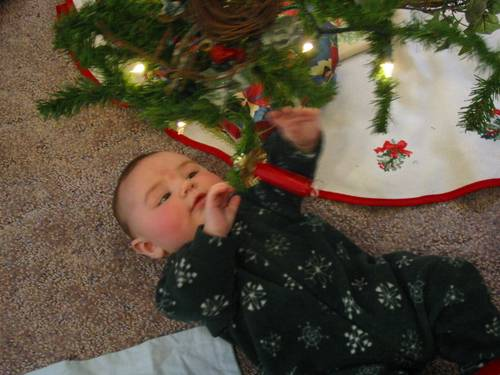 Picture of Seth playing with the Christmas tree